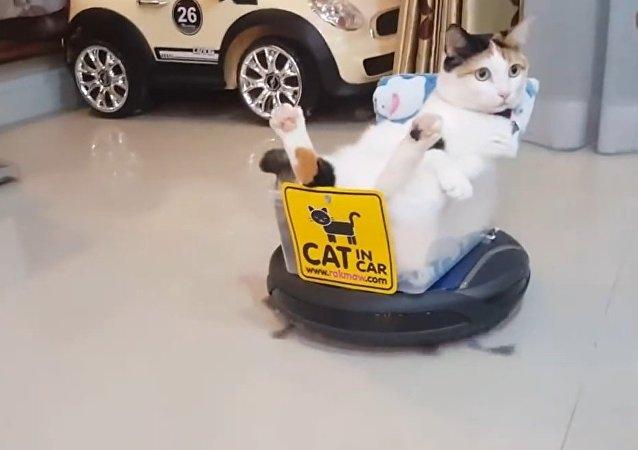 Teknolojinin efendisi kedi iş başında