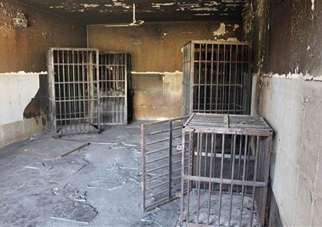 IŞİD Irak'ta esir aldığı kişileri kafeslere kapattı