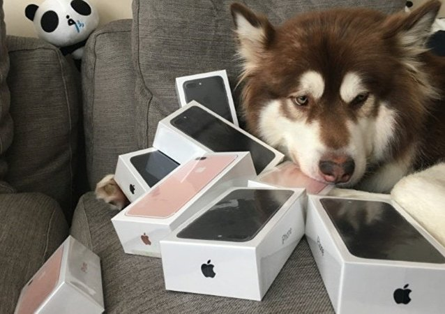 iPhone zengini köpek Coco