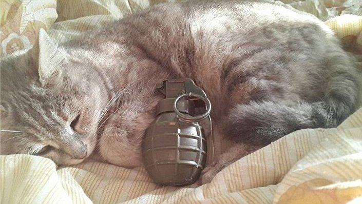 IŞİD militanları el bombası ya da intihar yeleği gibi silahların kedilerle birlikte fotoğraflarını çekerek sosyal medyada paylaşıyor.