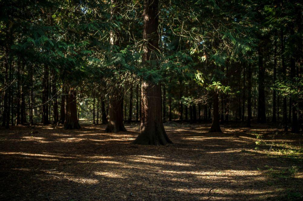 Kuron Dili milli parkındaki Kraliyet Ormanı.