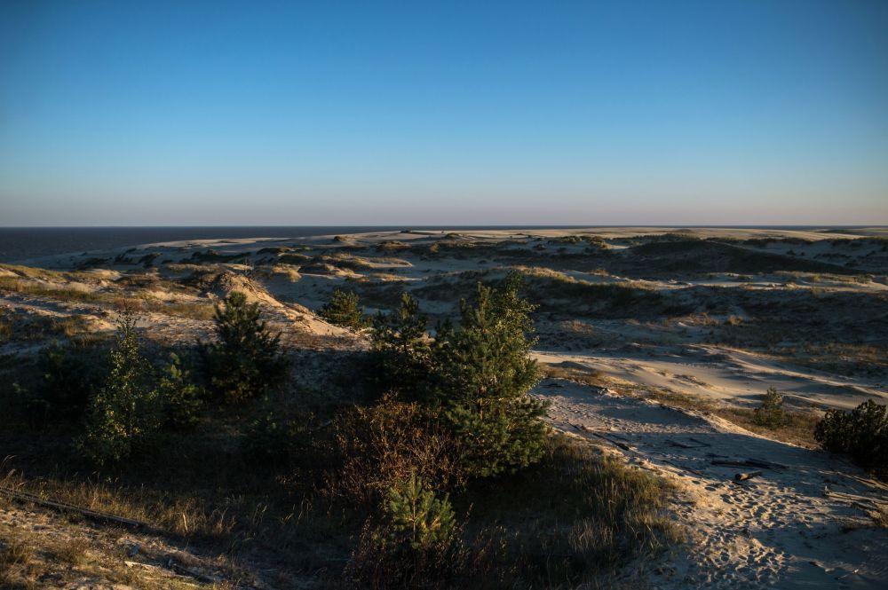 Kaliningrad Bölgesi'ndeki Kuron Dili milli parkındaki gözlem alanında manzara.
