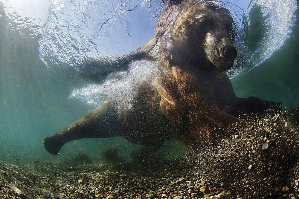 Rus fotoğrafçı Mike Korostelev'in çektiği 'Kararlı atış' fotoğrafı.