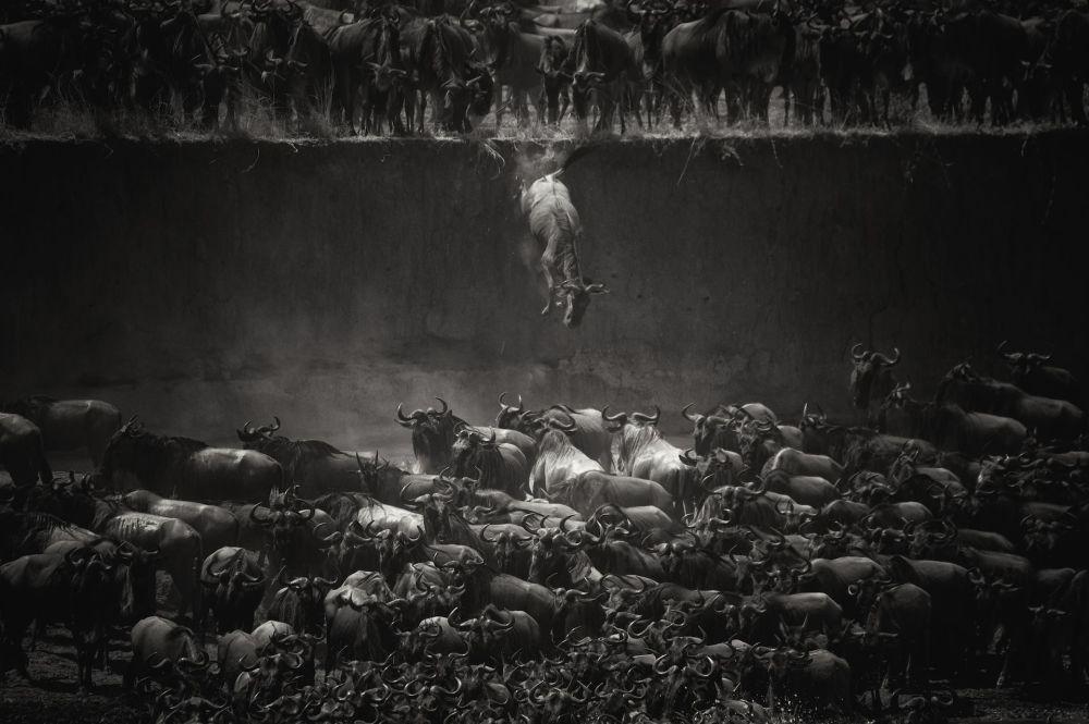 Belçikalı fotoğrafçı Nicole Cambre'nin çektiği 'İnanç sıçraması' isimli fotoğraf.