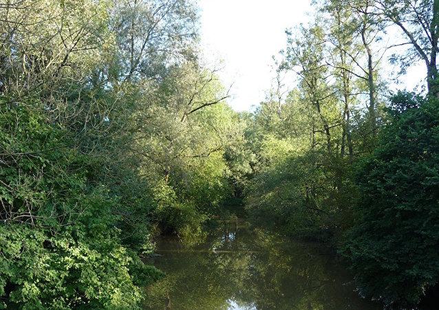 Avusturya'nın Pram bölgesinde bir nehir