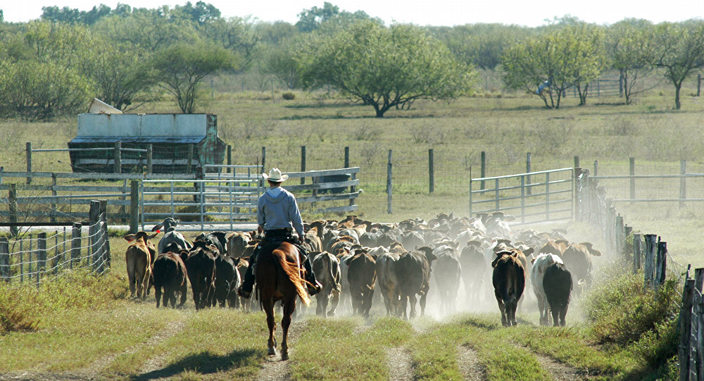 Teksas çiftlikleri