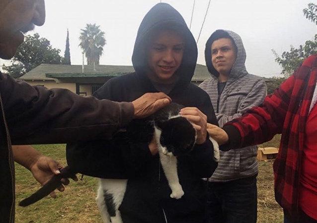 Elektrik direğinde mahsur kalan kedi kurtarıldı.