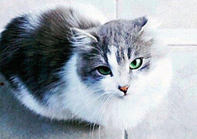 'Kedi Osman' boşanma protokolüne girdi