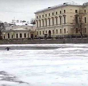 St. Petersburg kışını 'kontrole gelen' gizemli penguen