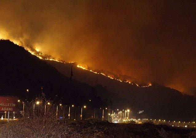 Trabzon'un Sürmene ilçesinde çıkan orman yangını söndürüldü.