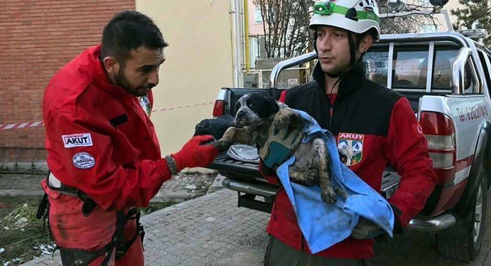 Kuyuya düşen köpek yavrusu kurtarıldı