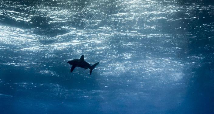 Fransız yüzücü, Pasifik Okyanusunu yüzerek geçecek
