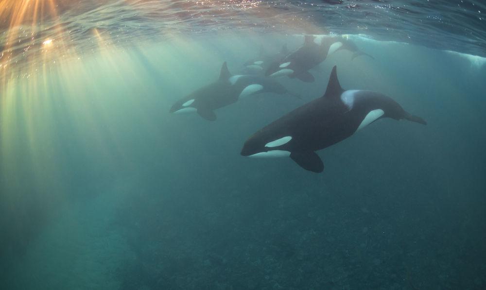 'Kara balina sürüsü' adlı fotoğrafın sahibi Nicholai Georgiou 'Yılın en perspektifli' fotoğrafçısı unvanını aldı.