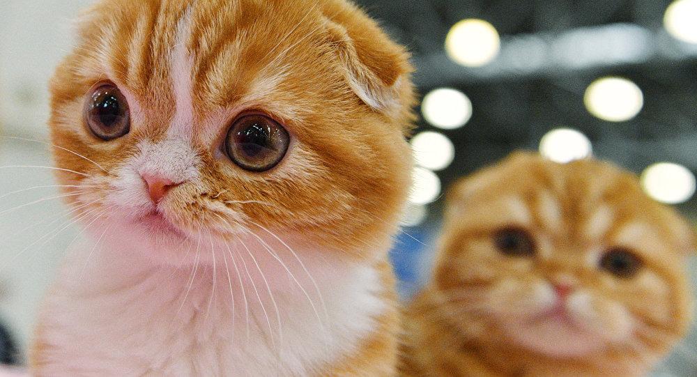 Seri katil 200'den fazla kediyi öldürdü