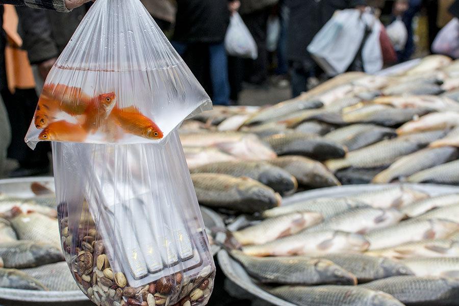 Japon balığı çoğu zaman sıradan poşetler içinde satılıyor.Elbette süs balıklar dışında, yemekte kullanılan balıklar da büyük talep görüyor.