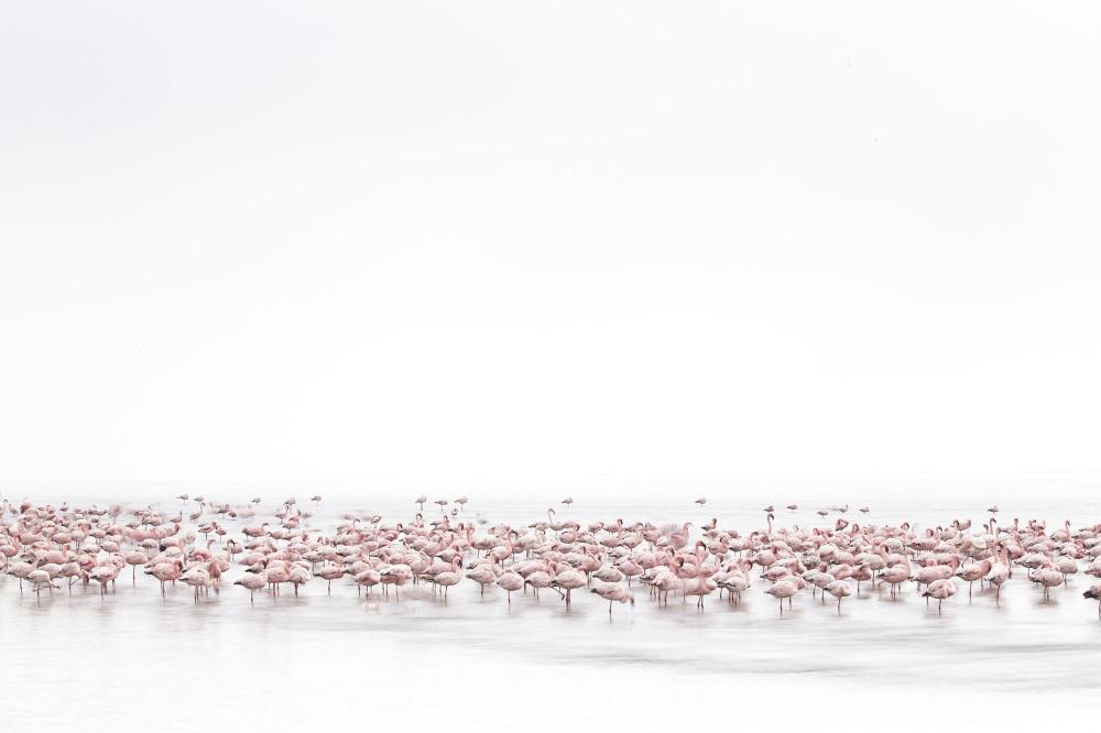 İsviçreli fotoğrafçı Alessandra Meniconzi'nin 'Flamingoların Ruhu' adlı çalışması