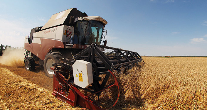 Rusya'nın Krasnodar bölgesinde bir tarım arazisi