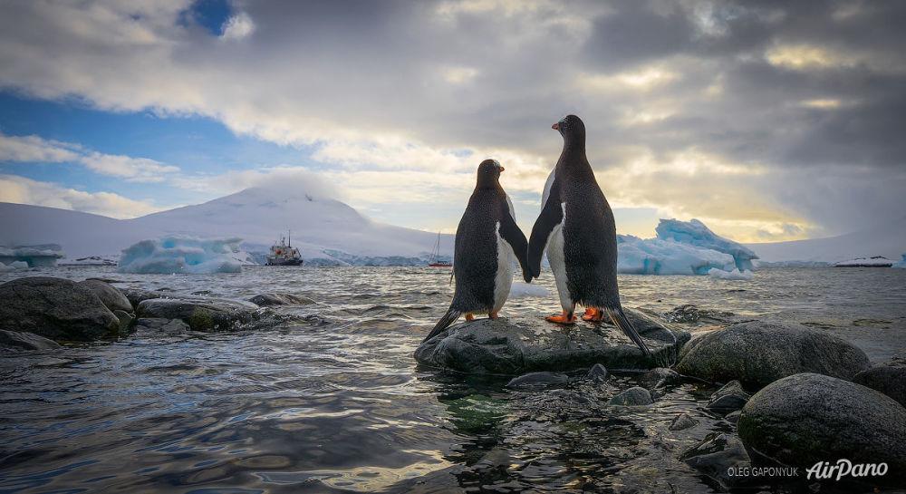 Antarktika'daki penguenler.