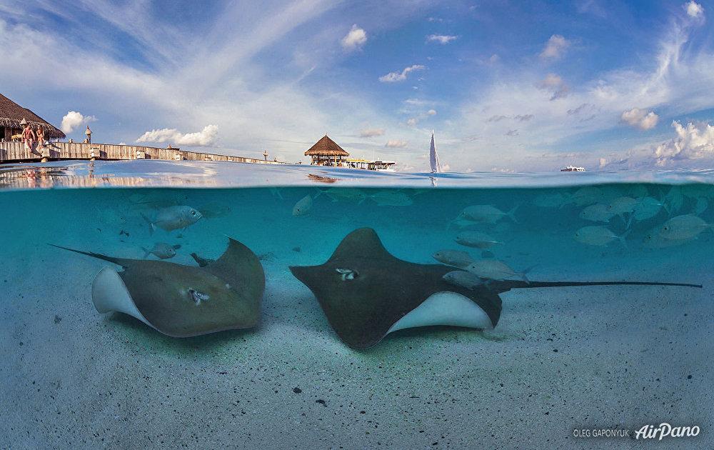Maldivlerin sualtı dünyası.