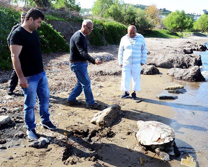 Bodrum'da 3 kurşunla öldürülmüş Caretta caretta bulundu