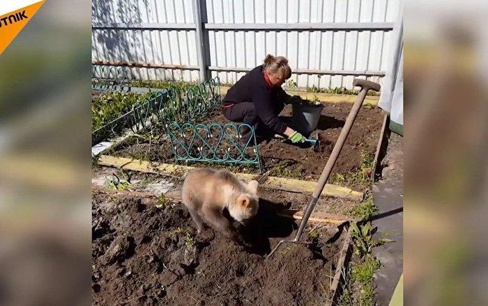 Bahçıvanlık yapan ayı yavrusu internet yıldızı oldu