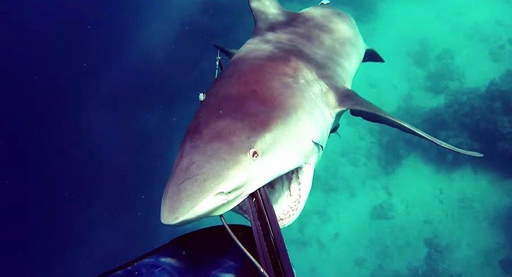 Köpek balığı