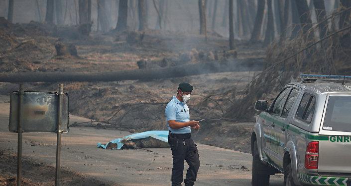 Portekiz'de orman yangını