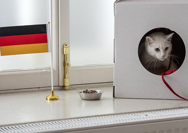 Rusya'nın ağırladığı Konfederasyonlar Kupası'nın kahin kedisi Aşil, turnuvanın şampiyonunu doğru tahmin etti. Almanya dün gerçekleşen final maçında Şili'yi 1-0 mağlup ederek şampiyonluğu elde etti.
