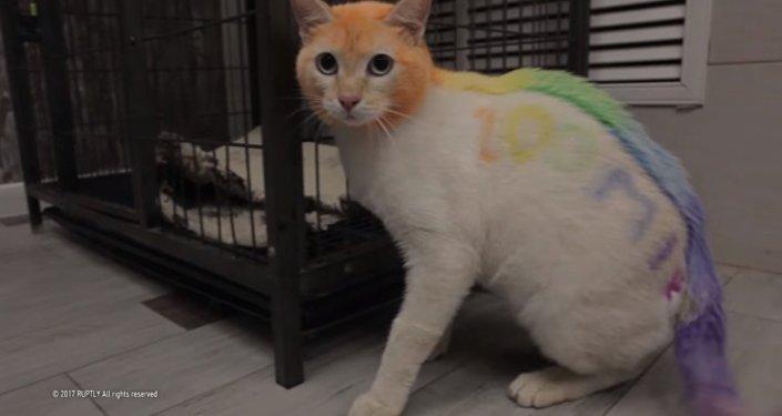 Gökkuşağı renklerine boyanan kedi