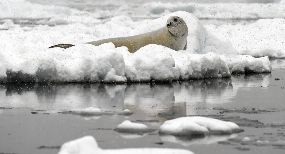 Eriyen Antarktika