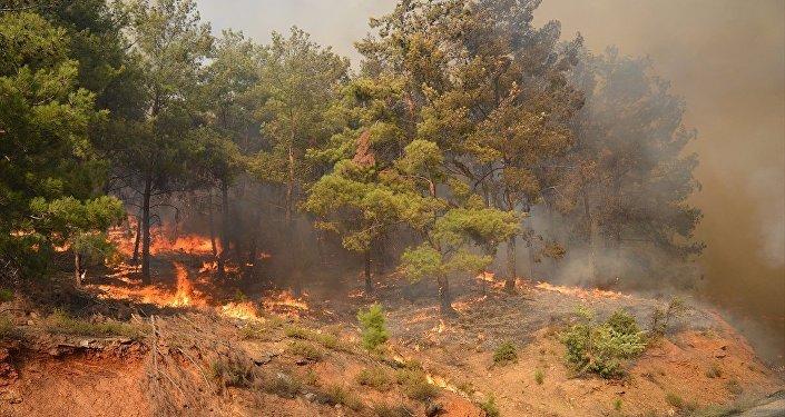 İzmir'in Bayındır ilçesinde ormanlık alanda çıkan yangın