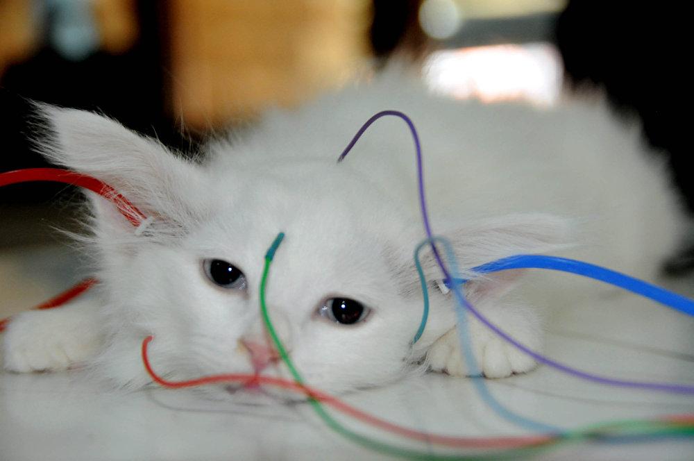 YYÜ Rektörü Prof. Dr. Peyami Battal ise uzun zamandır Van kedilerinin 'Sağır mı değil mi?' konusunun tartışıldığını söyledi. Battal, Gerekli çalışmaları yaptıktan sonra aynen çocuklara uygulanan testin, kedilere ve hayvanlara uygulanabileceğini öğrendik. Van kedilerinin hepsinin sağlık durumlarının yazıldığı birer sağlık kartları bulunuyor. Bundan sonra o karneye kedilerin ne kadar duyup duymadığını da işleyeceğiz dedi.