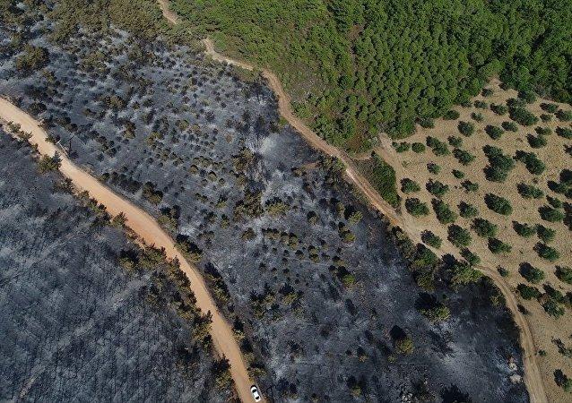Ayvalık orman yangını