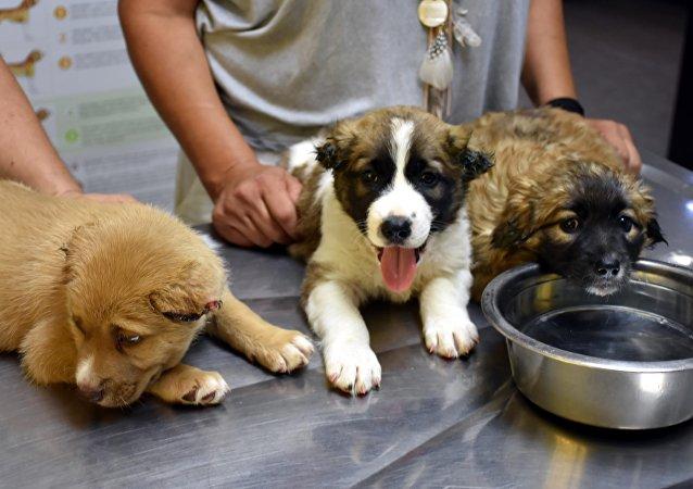 Muğla'da bir askerin işkence yaptığı köpekler