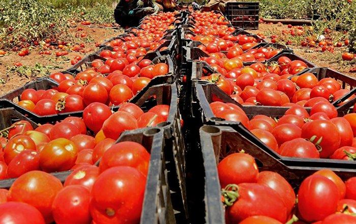 Türkiye'nin domates ihracatı laboratuvar sonuçlarına kaldı