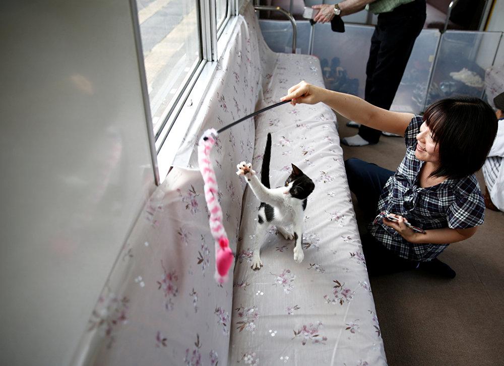 Japonya - Kedili vagonlar