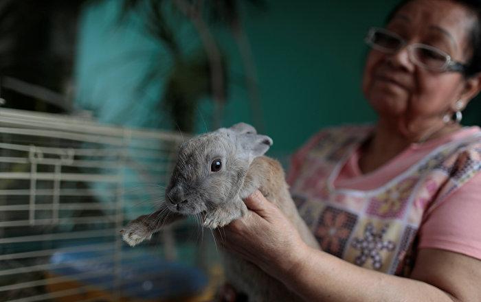 Venezüella hükümeti: Tavşanları yiyin
