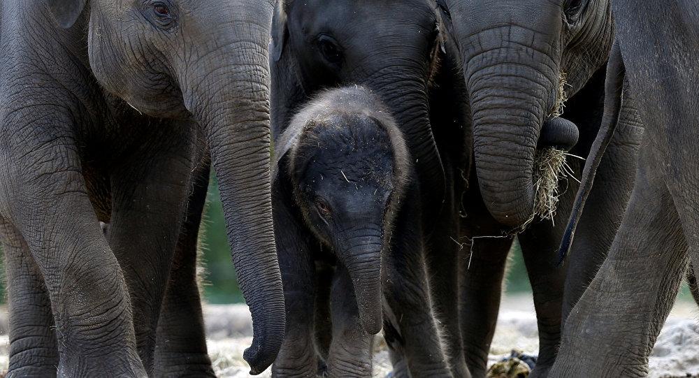 filler yasa dışı avlanmaya çalışan 19 kişiyi öldürdü