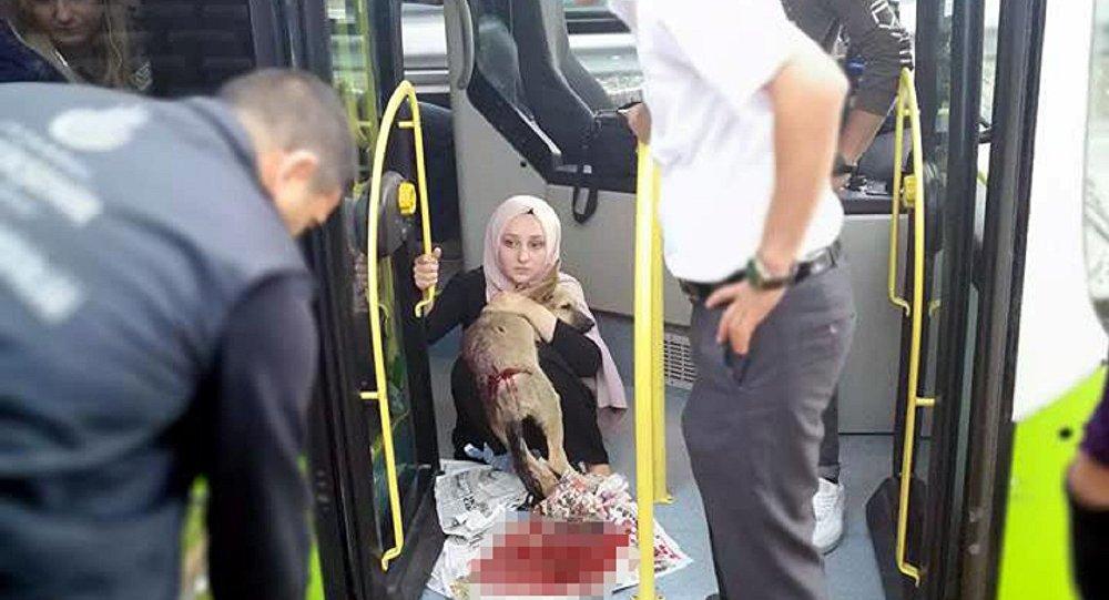 Köpeği ezerek öldüren sürücünün ehliyetine el konuldu