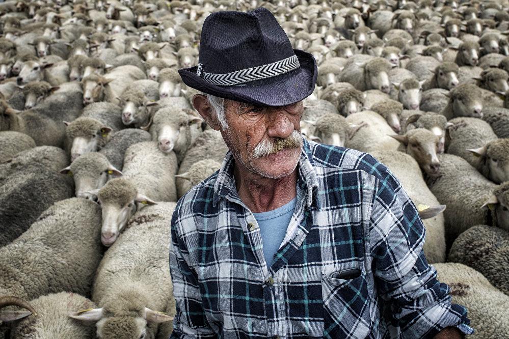 Koyunlar - Lyon