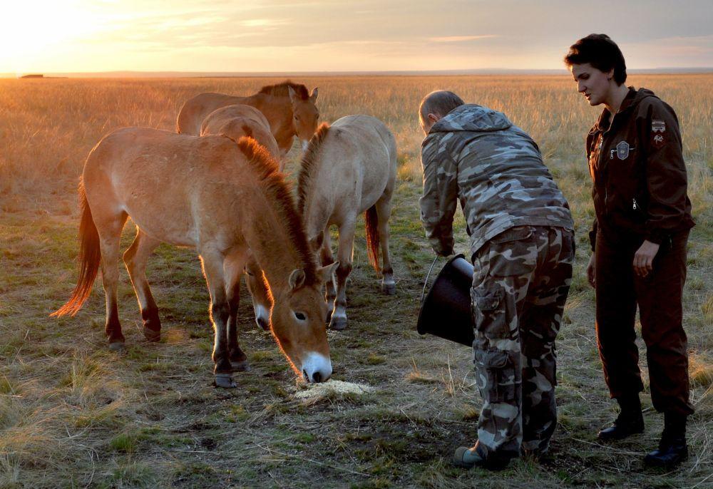 Vladimir Putin ve hayvan dünyası