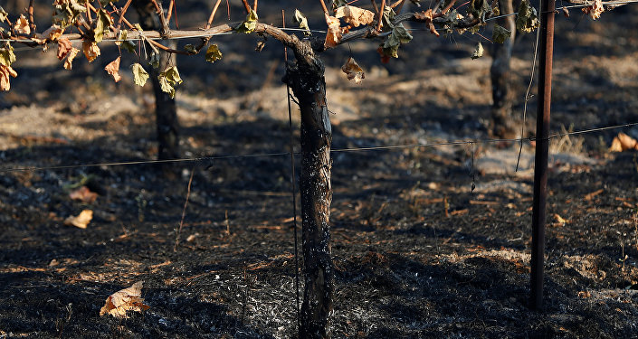 Kaliforniya-Orman-Yangın