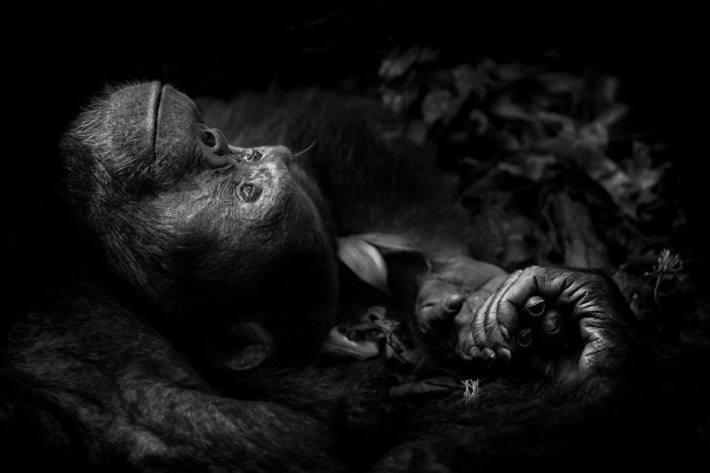 2017 Yılı Vahşi Yaşam Fotoğrafçısı ödülü kazananları açıklandı