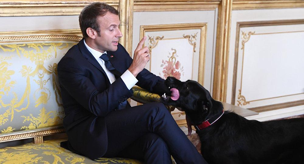 Fransa Cumhurbaşkanı Emmanuel Macron ve köpeği