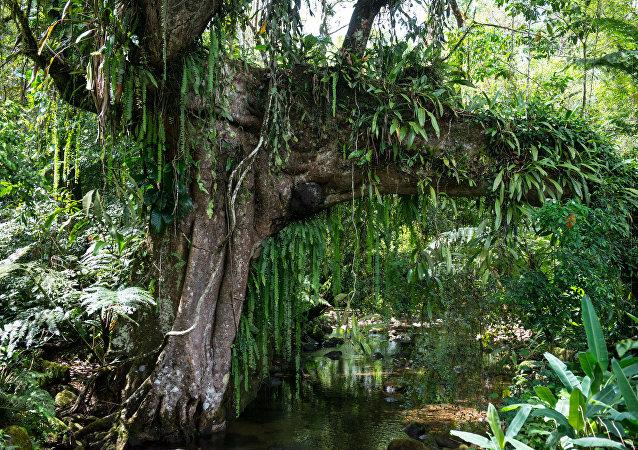Tropikal Ormanlar