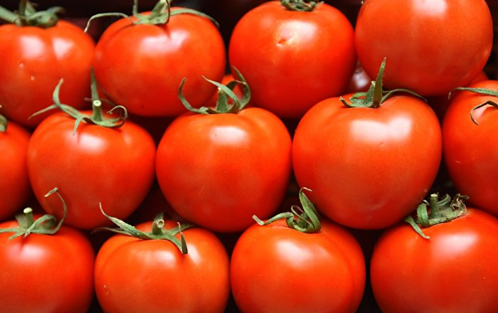 Rusya: Türkiye'yle görüşmelerimiz sonucunda domates alımını azaltabilir ya da artırabiliriz