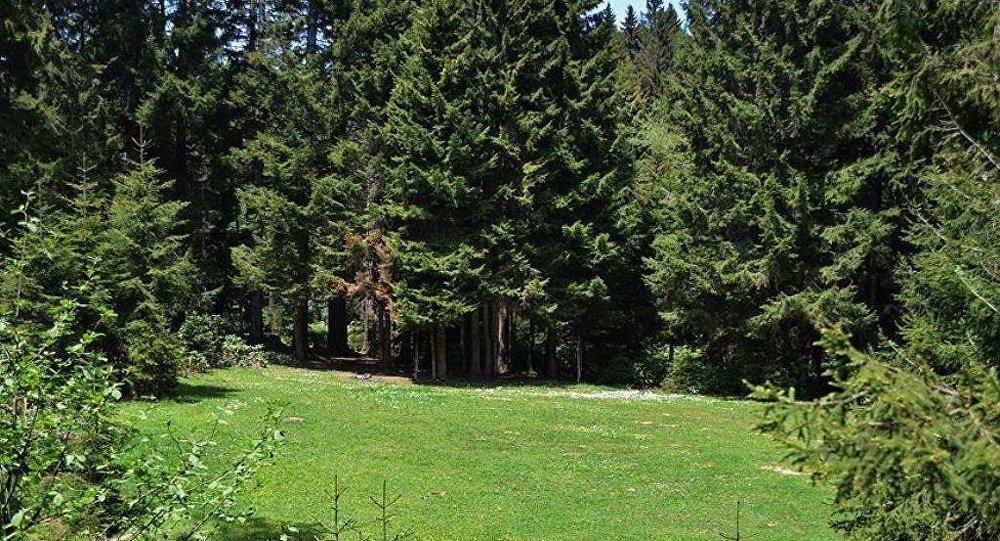 Yeşil alan - orman
