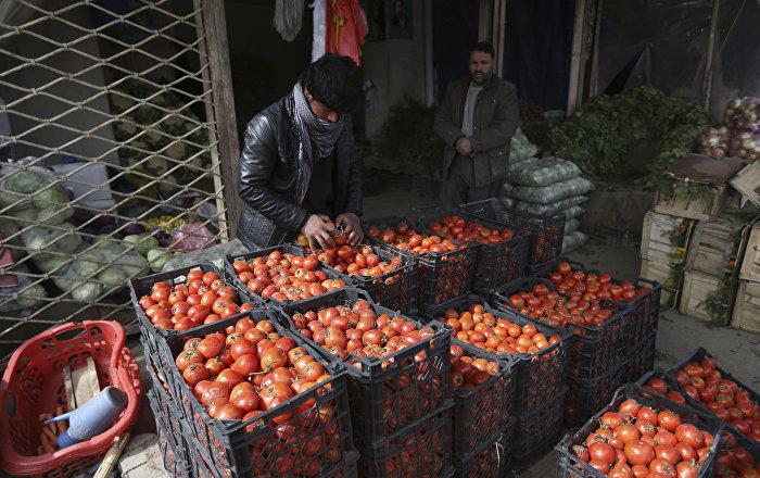 Rusya, Türk domatesine yönelik kısıtlamaları kaldırdı