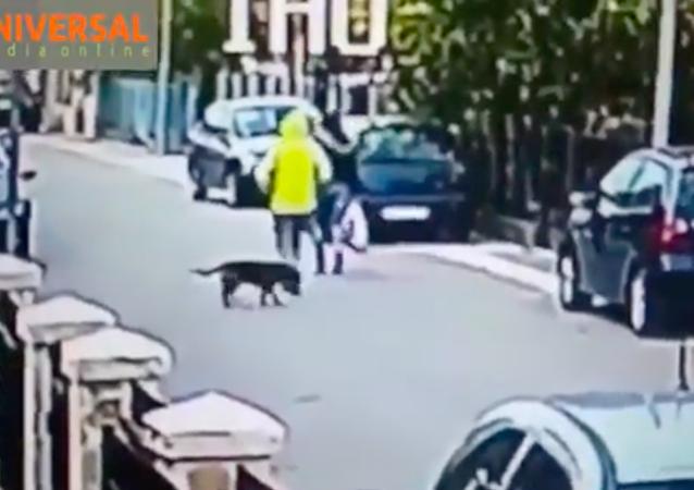 Sokak köpeği, kadını gaspçıya karşı korudu