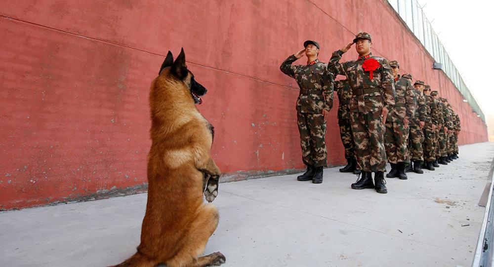 Çin'de askerleri 'selamlayan' bir köpek